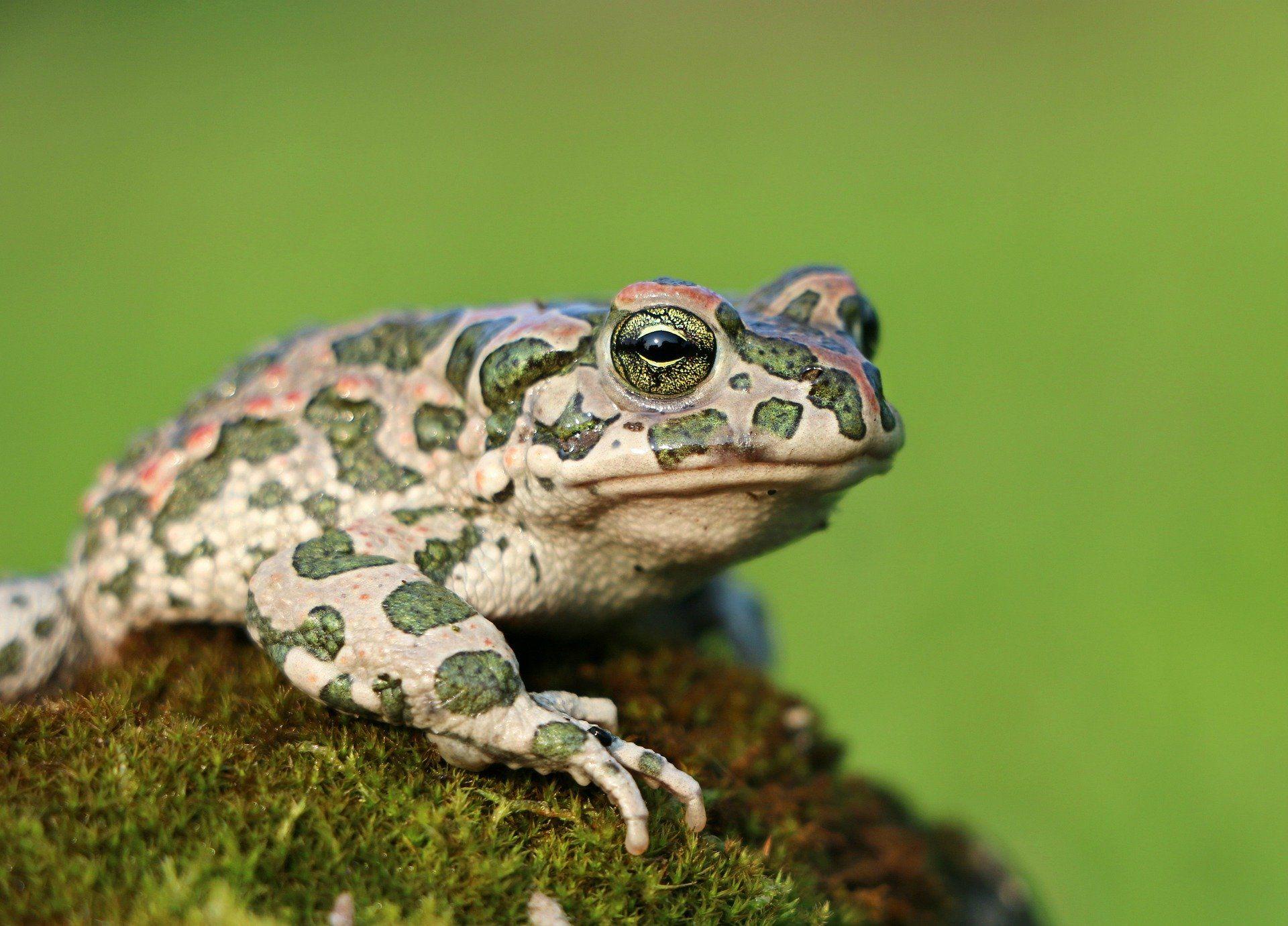 Скачать красивое фото жабы в хорошем качестве