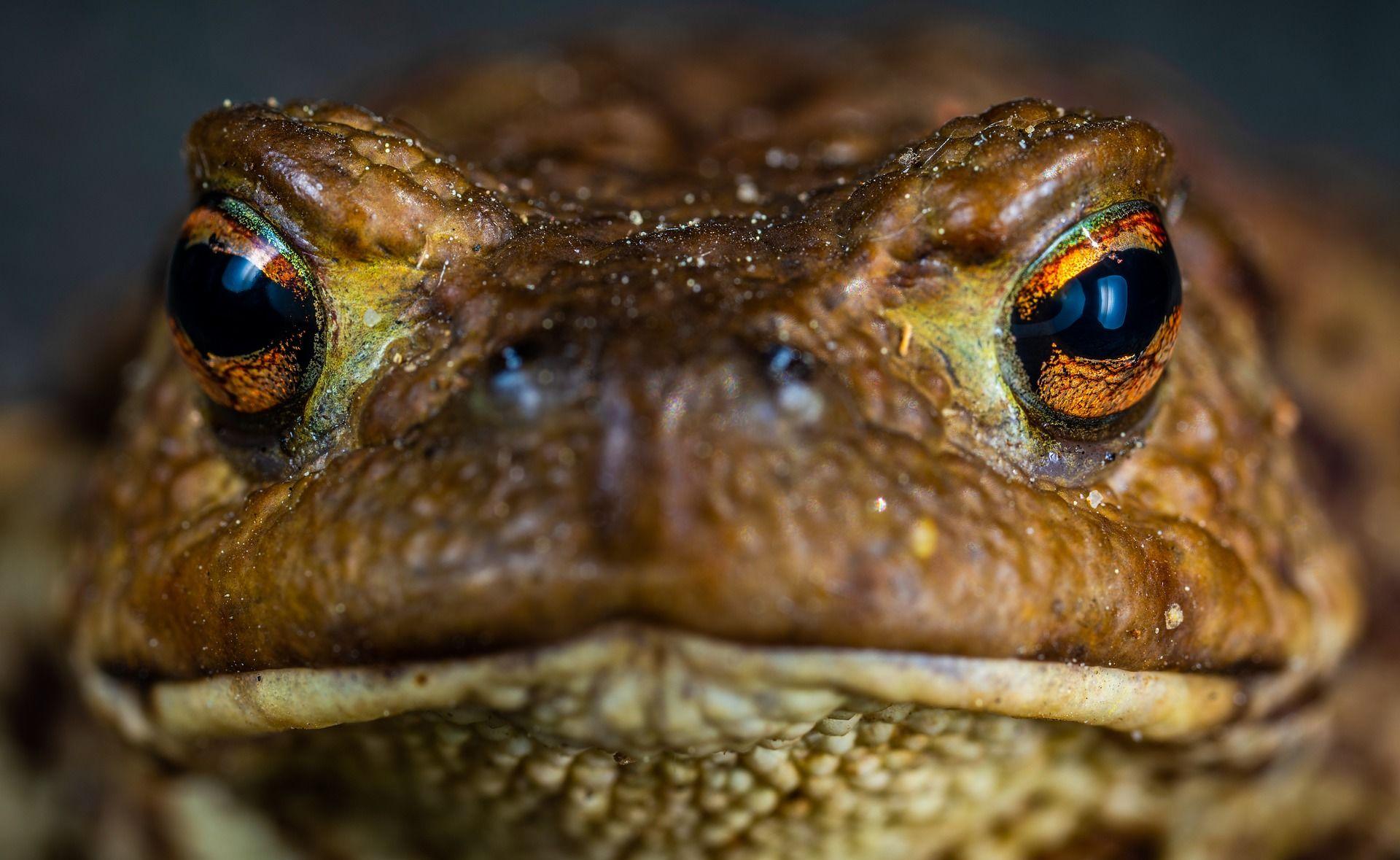Смотреть интересную картинку жабы на природе