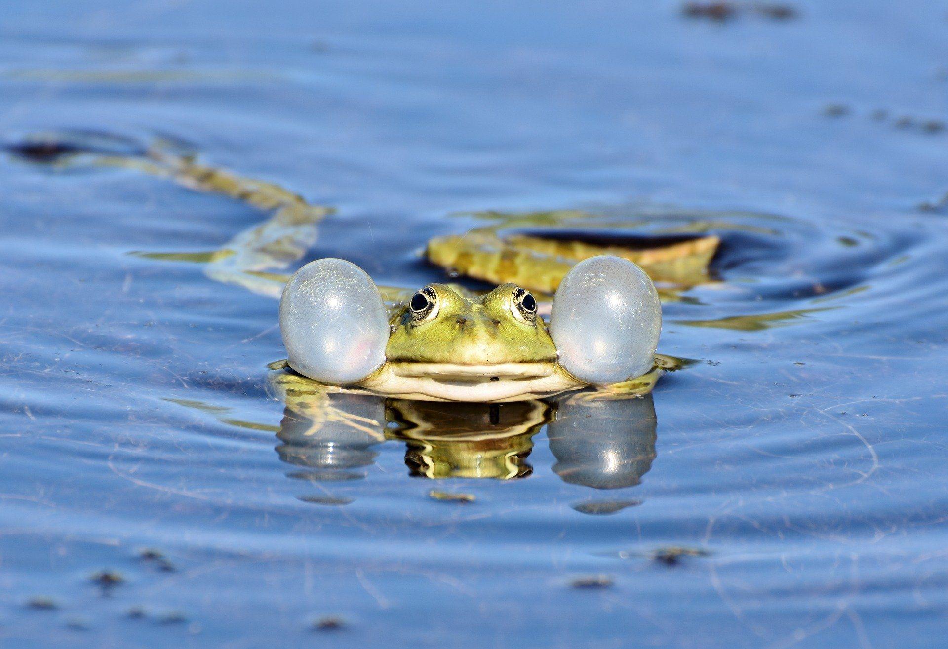 Смотреть бесплатно картинку жабы