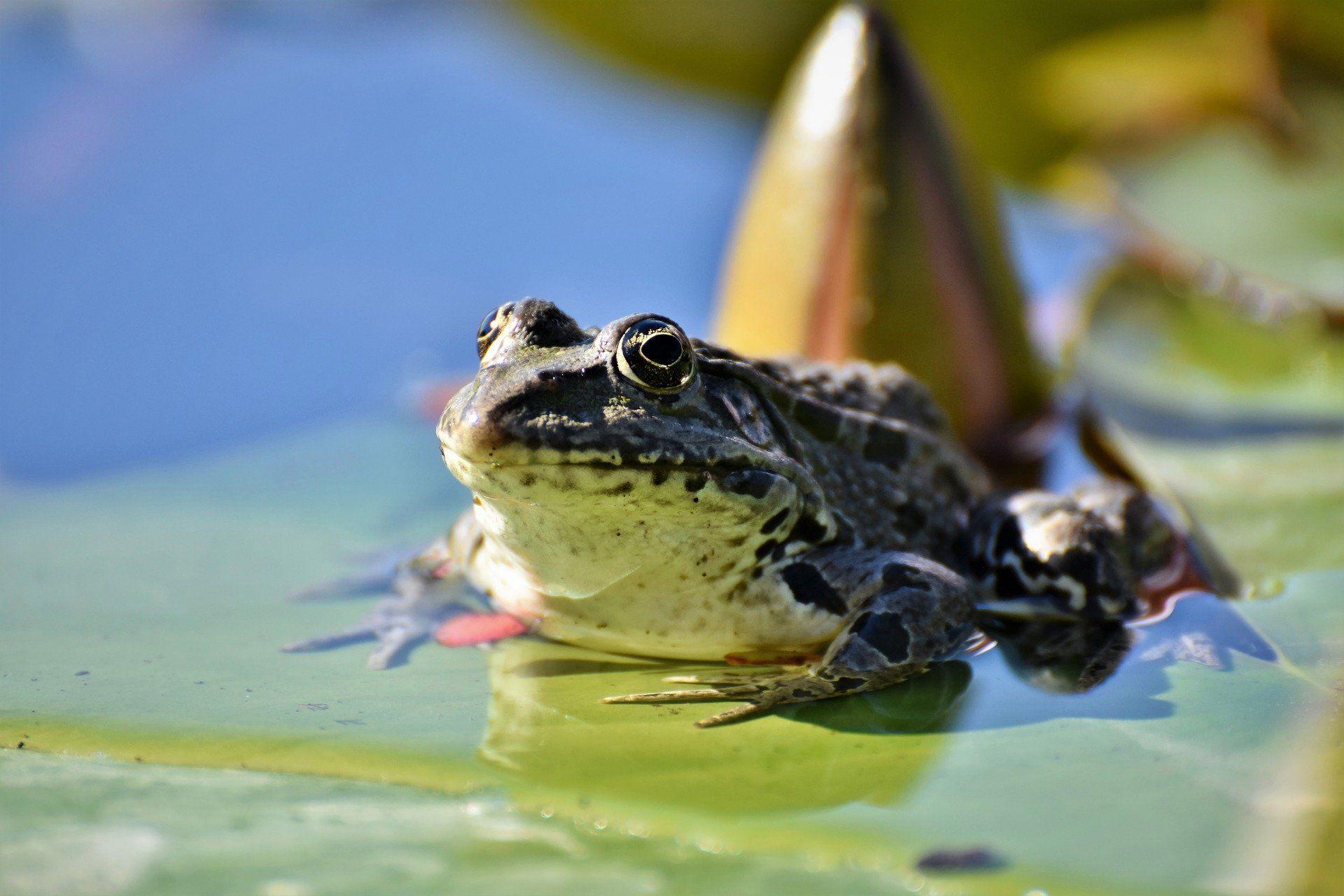 Смотреть лучшее фото жабы