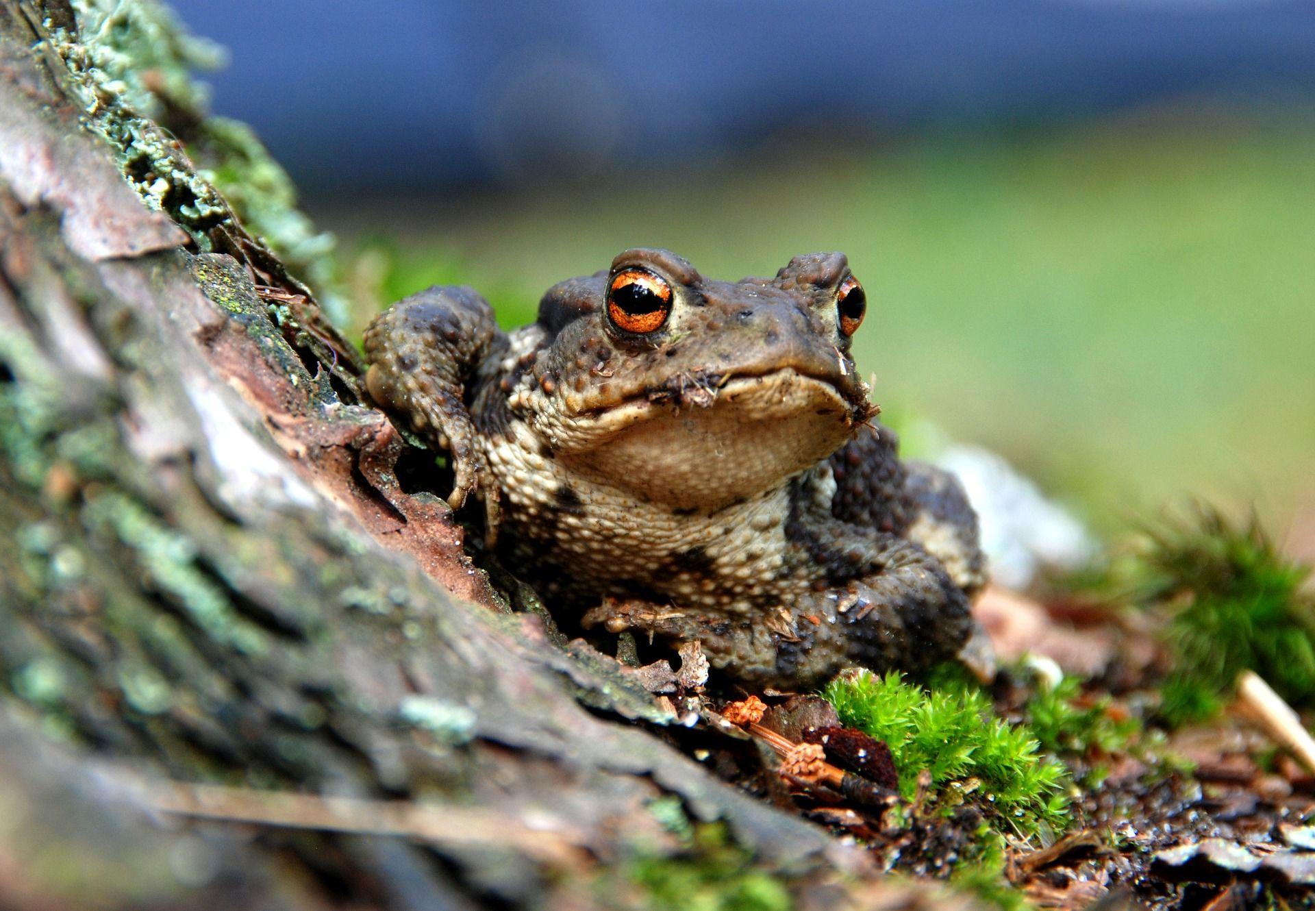 Скачать онлайн бесплатно красивое фото жабы