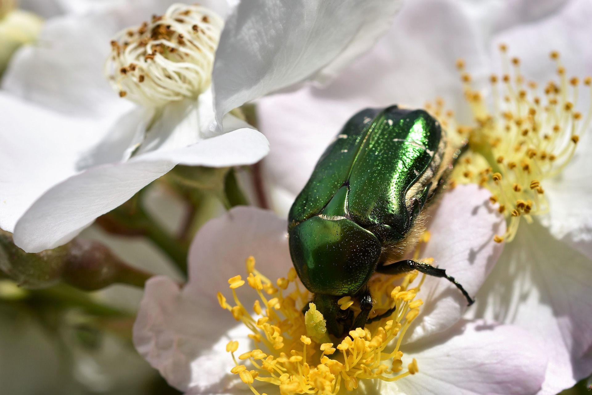 Скачать лучшее фото жука крупным планом