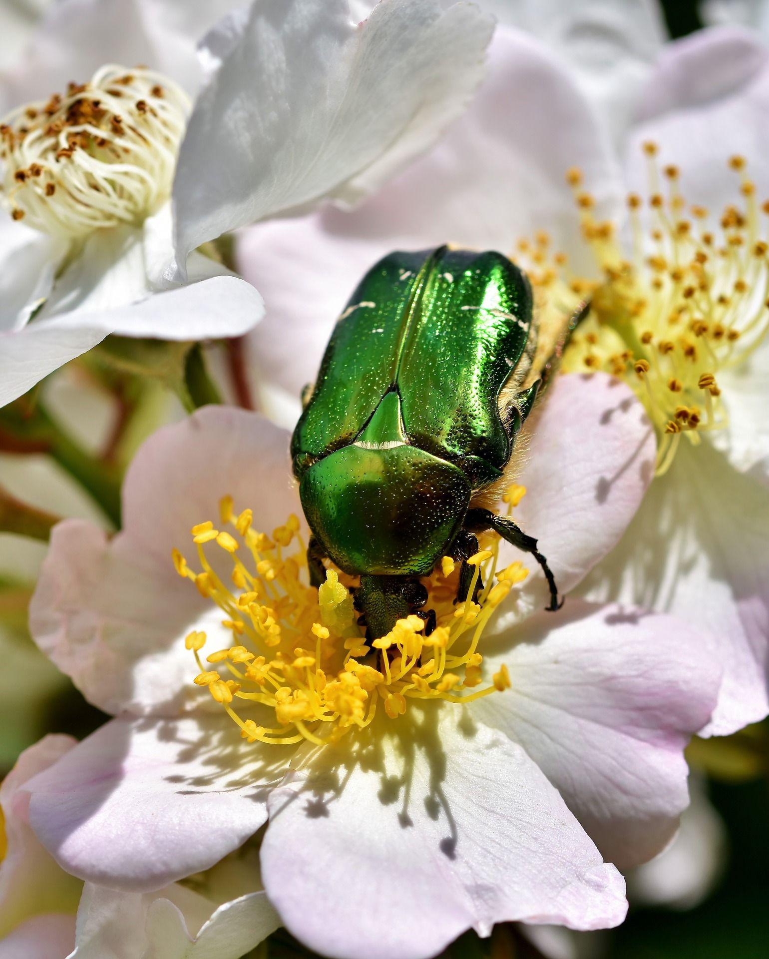 Смотреть красивую картинку жука на природе
