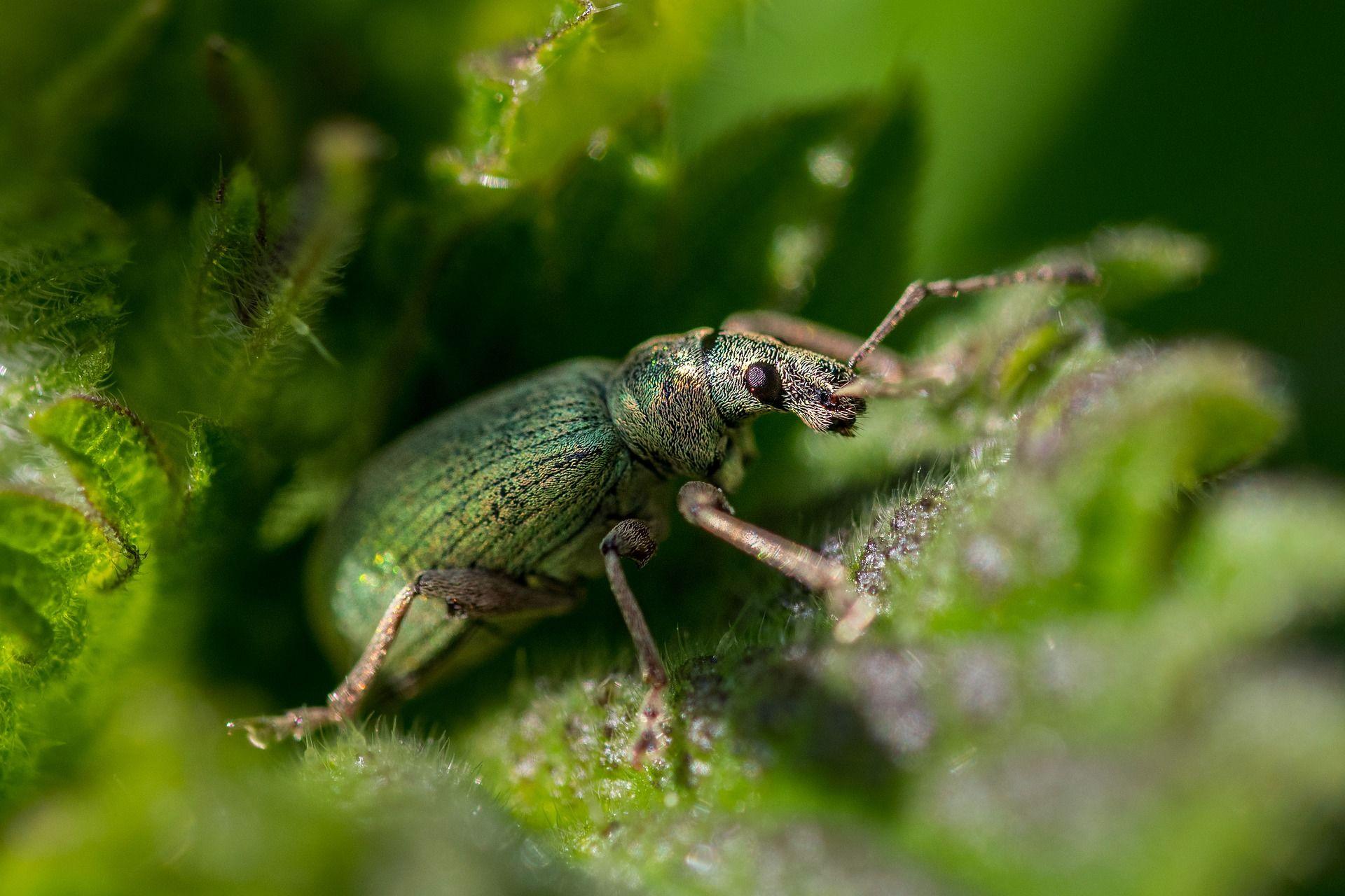 Смотреть необычную картинку жука среди цветов