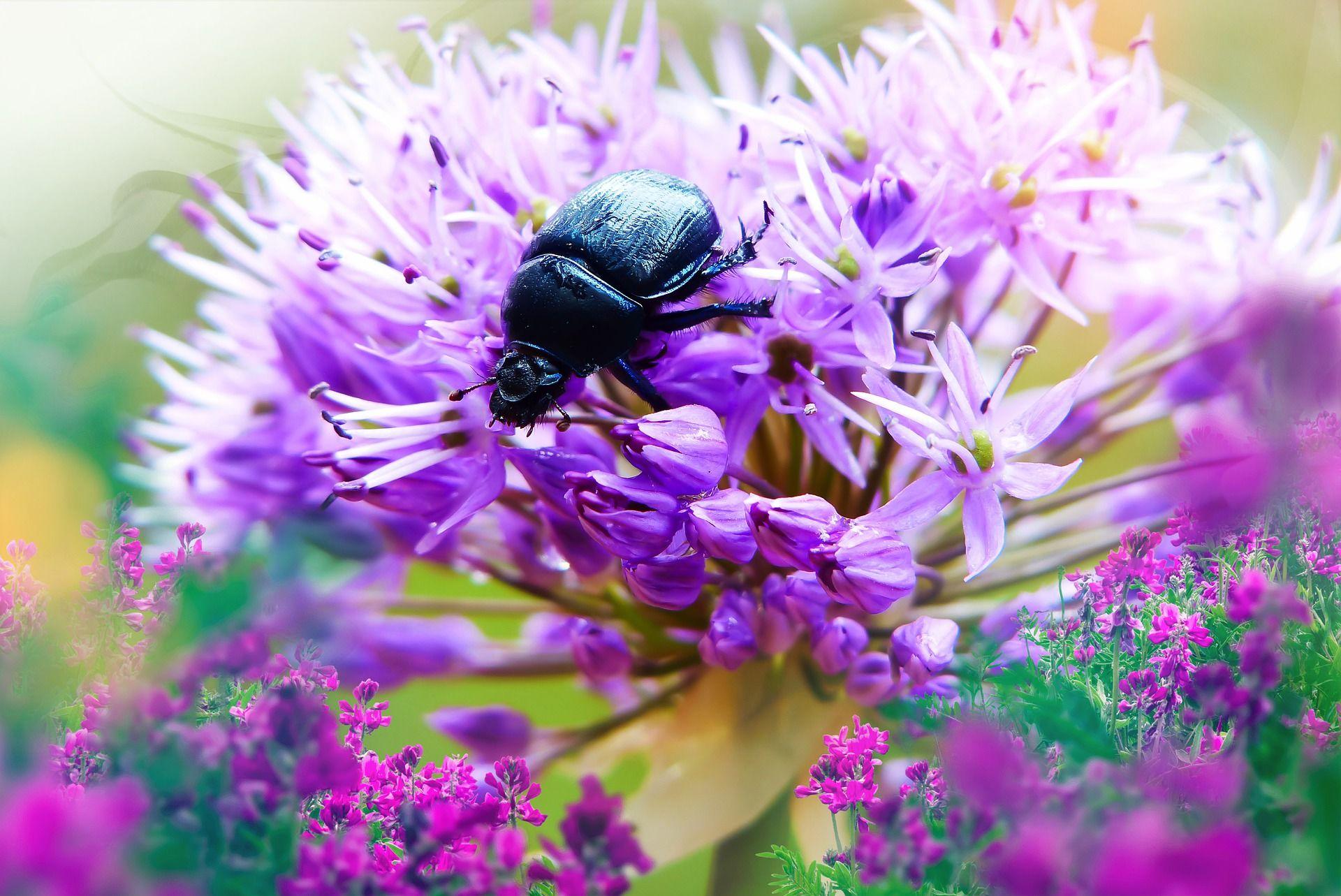 Скачать бесплатно лучшую картинку жука в хорошем качестве