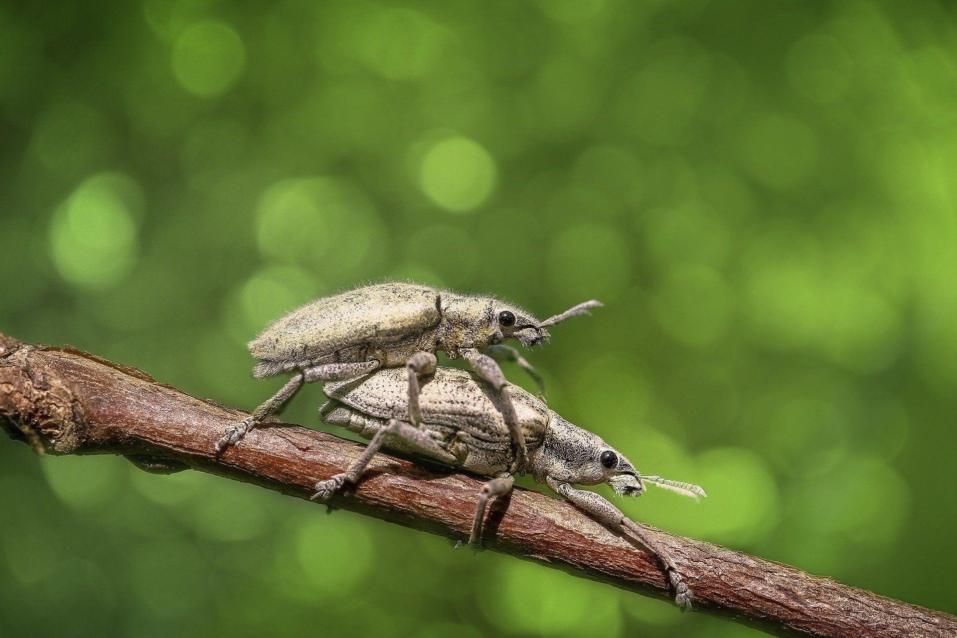 Смотреть лучшее фото черного жука