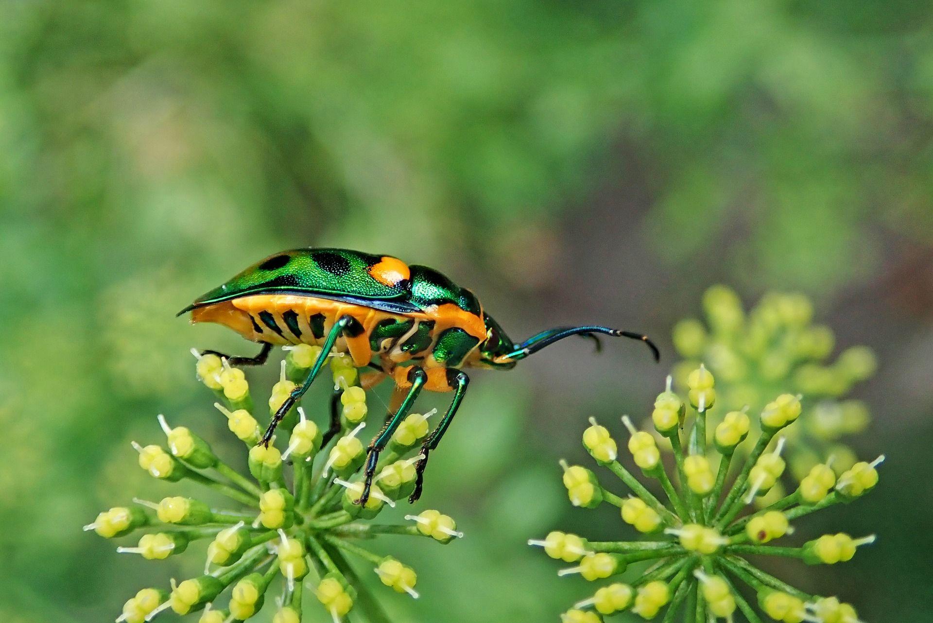 Необычное фото небольшого жучка в природе