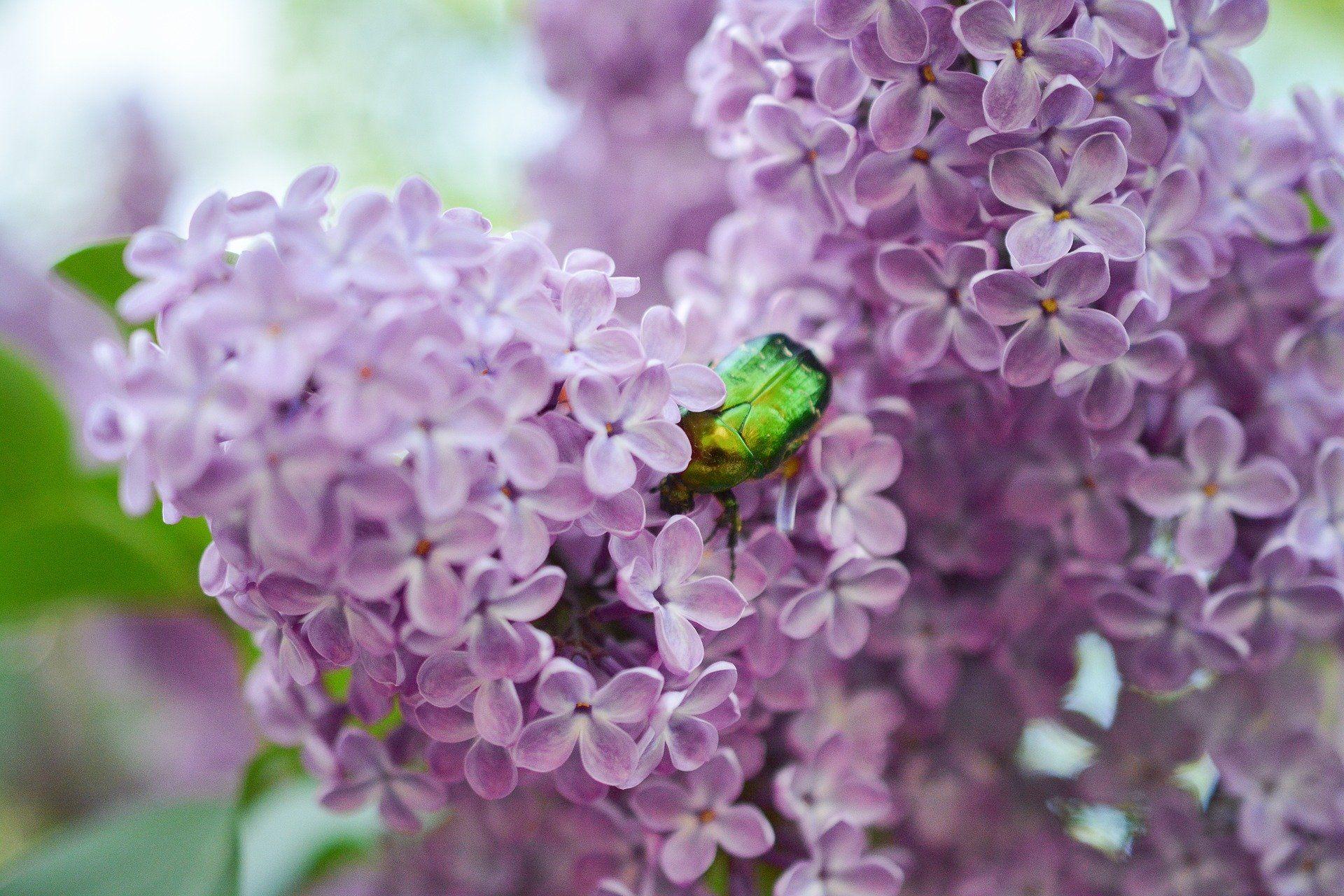 Смотреть бесплатно фото красивого жука на веточке