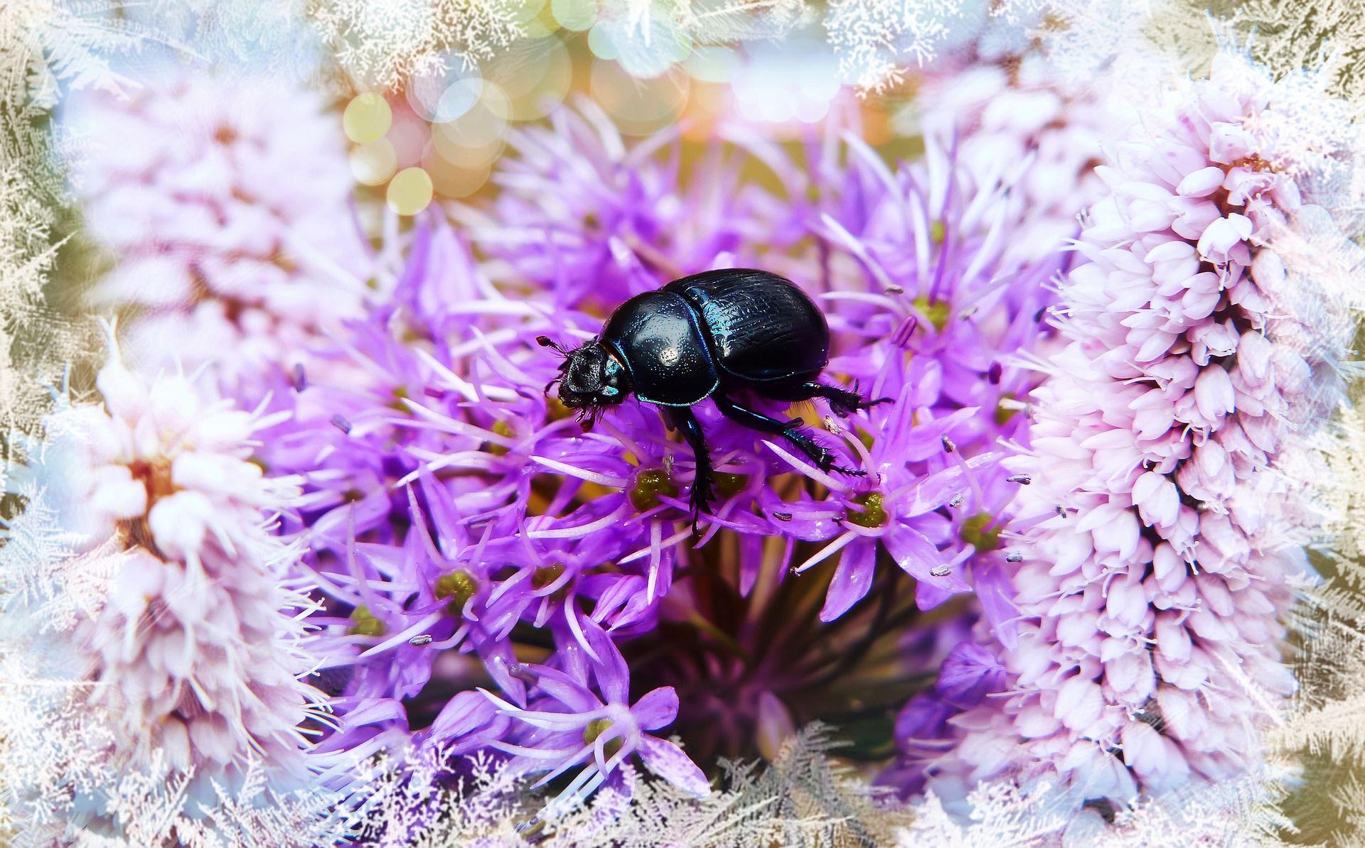 Смотреть лучшую картинку жучка на цветке