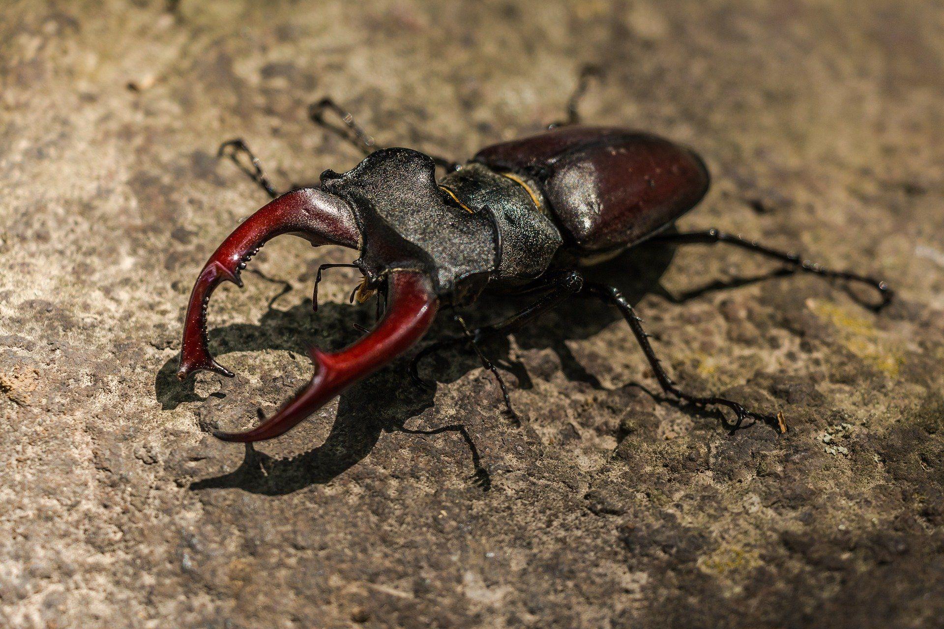 Скачать бесплатно красивую картинку жука в природе