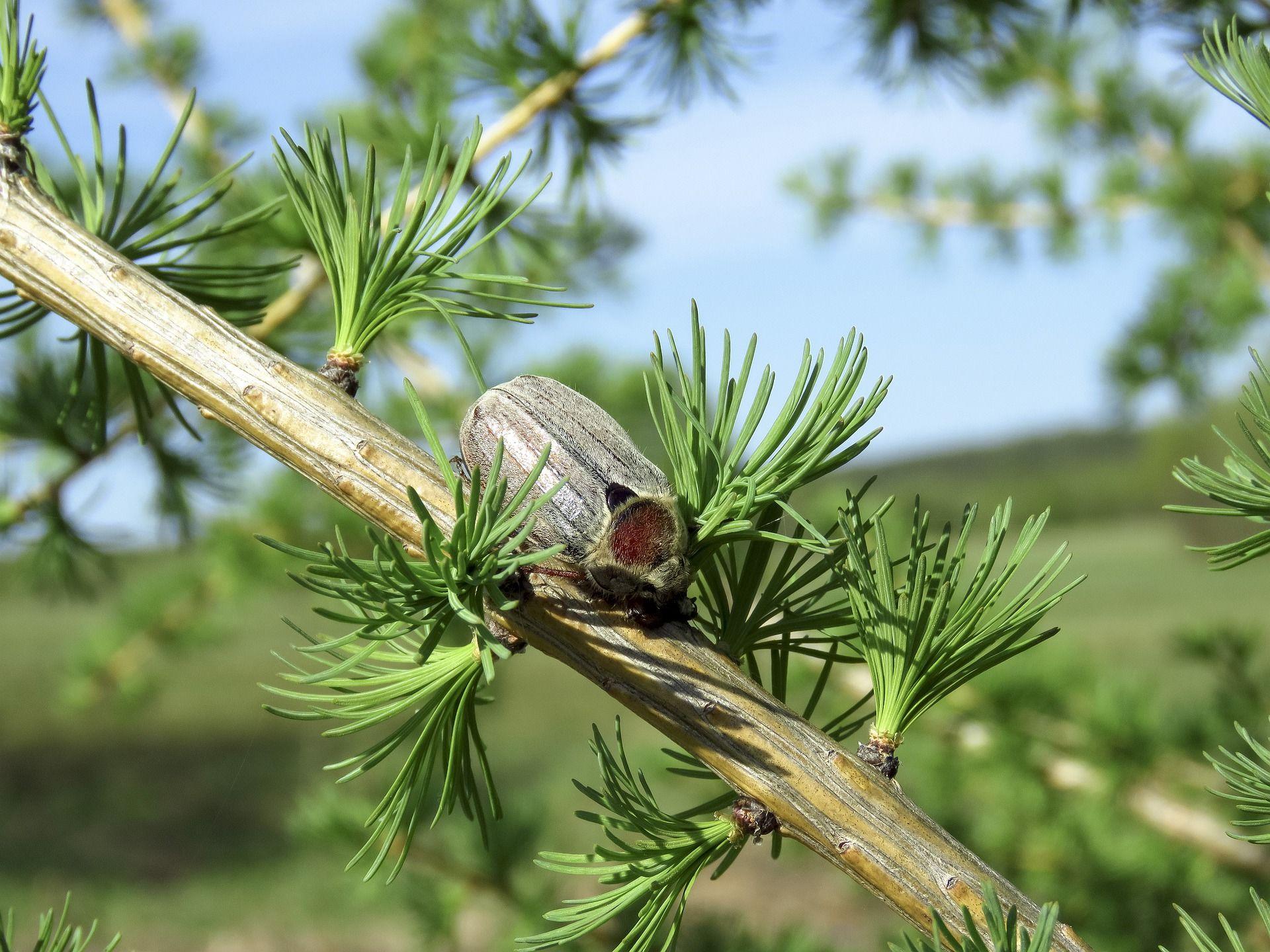 Смотреть красивое фото жука среди цветов
