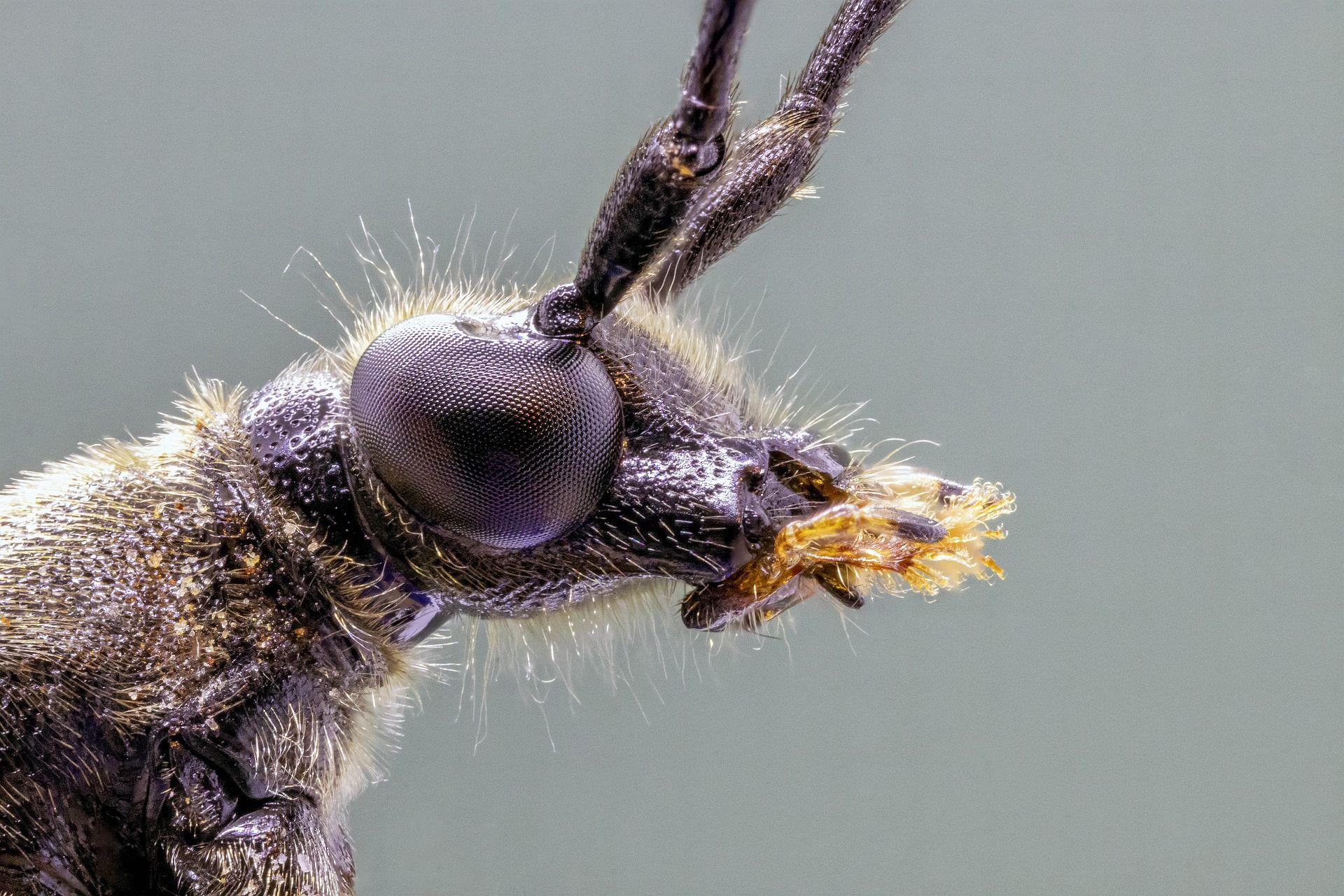 Скачать бесплатно фото жука крупным планом