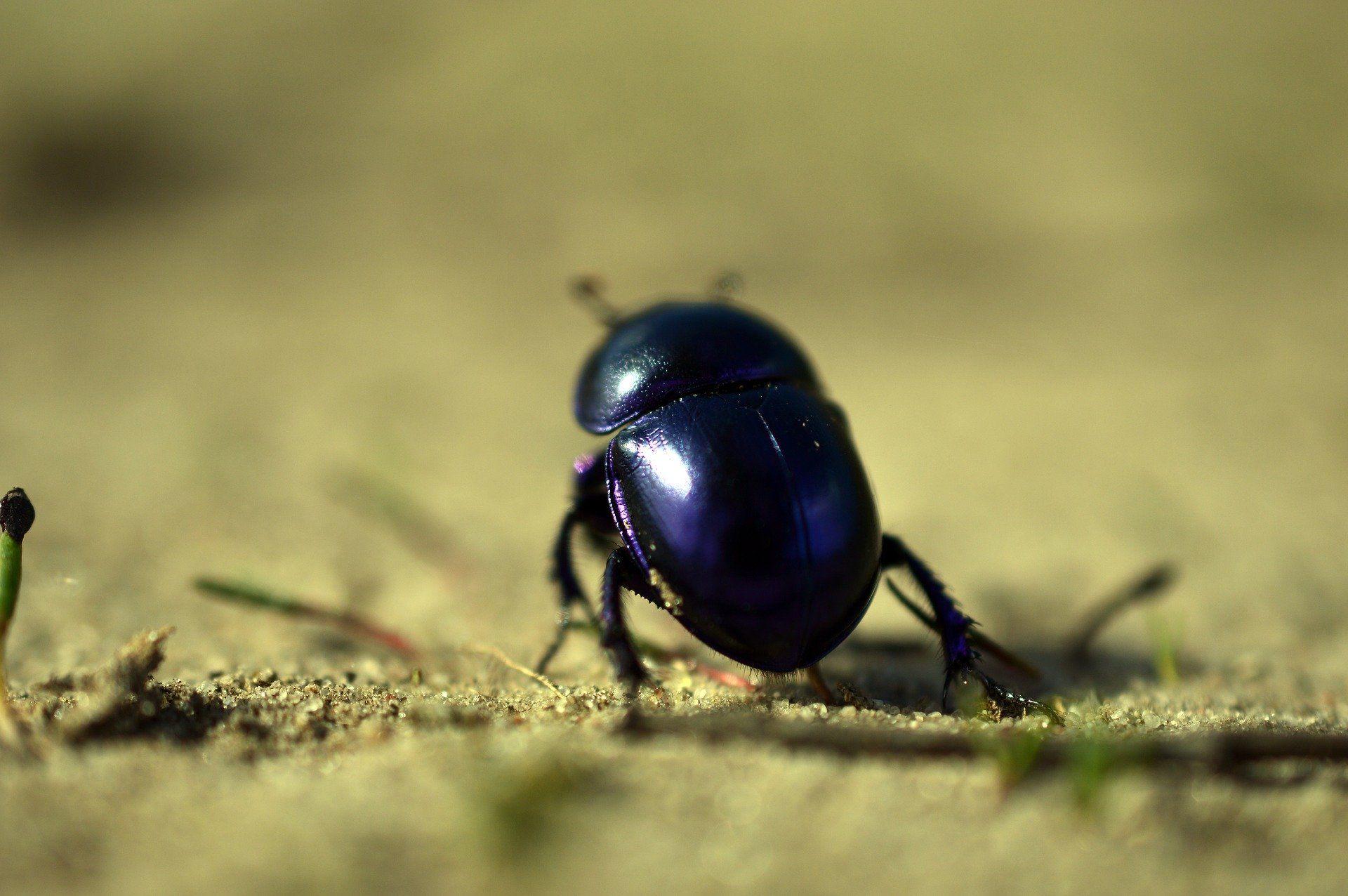 Фото необычного синего жука
