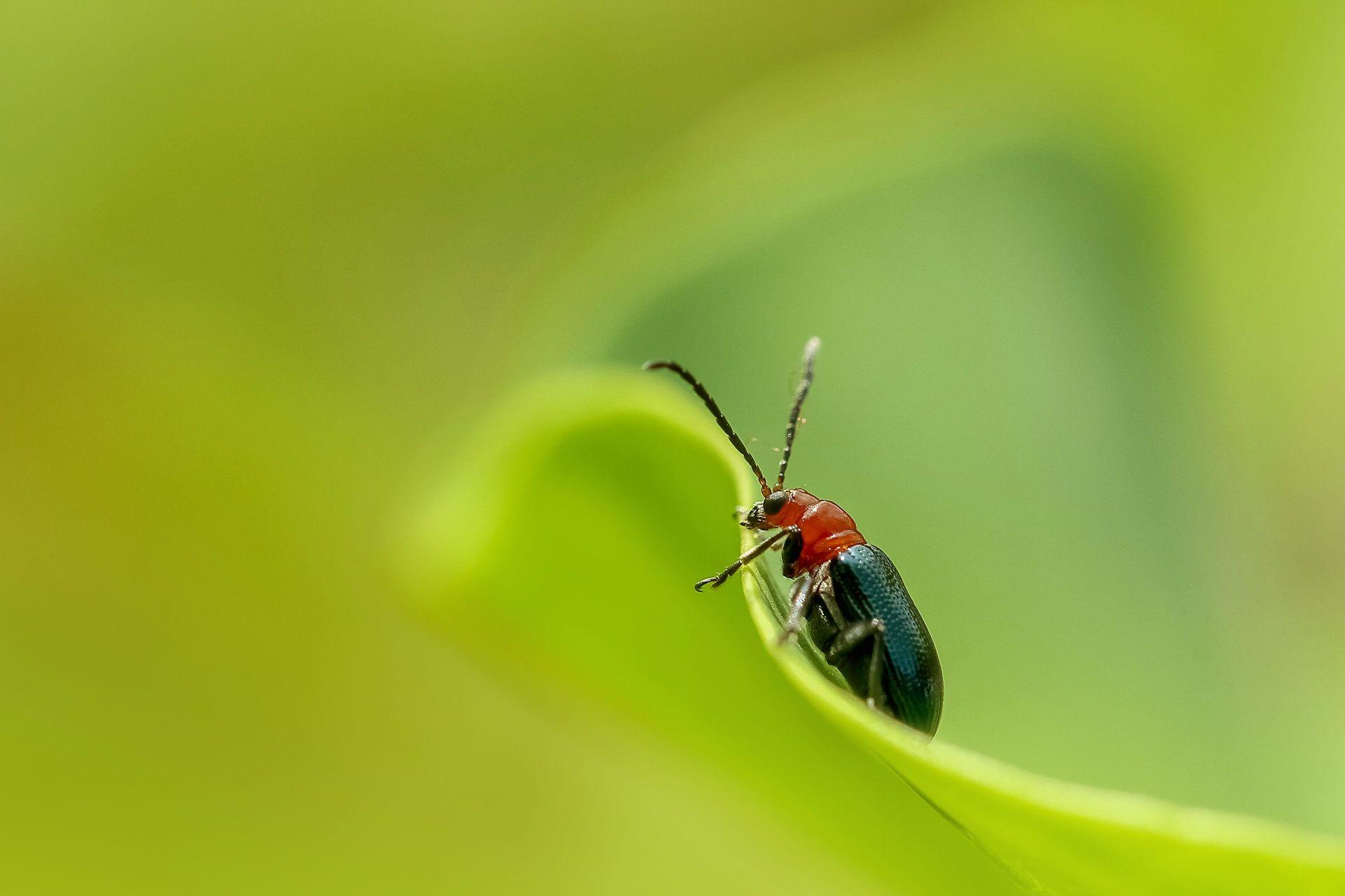 Смотреть лучшее фото маленького жучка на листочке