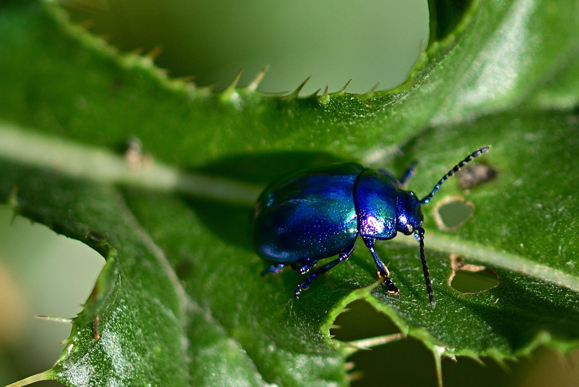 Смотреть лучшую картинку большого жука