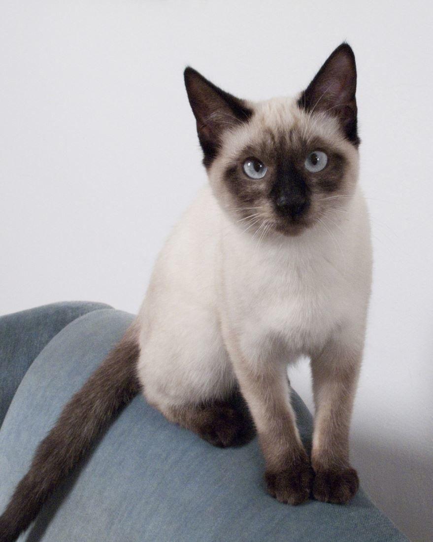 Фото породы кошек с красивыми глазами