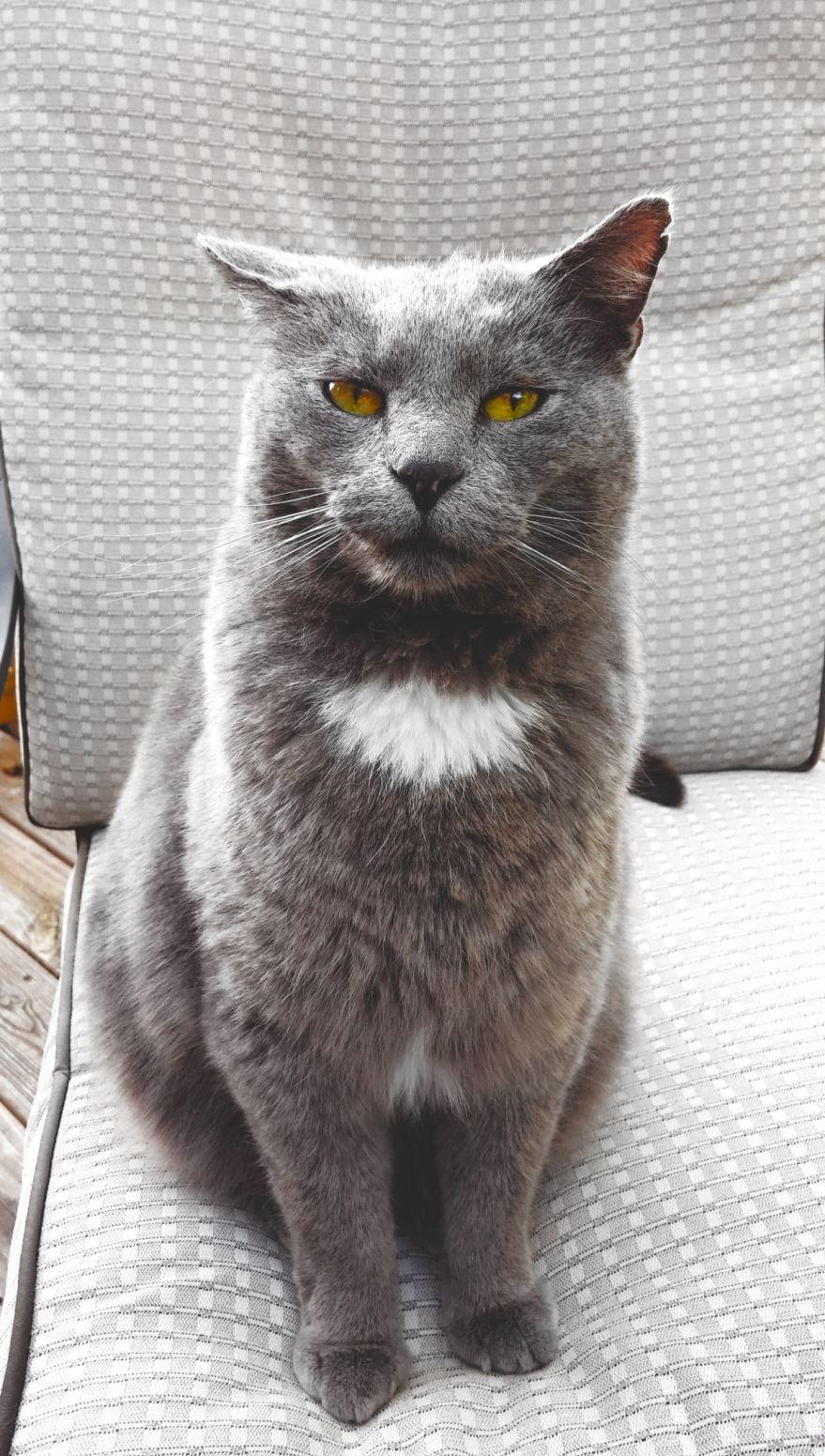 Лучшие фото британской породы кошек