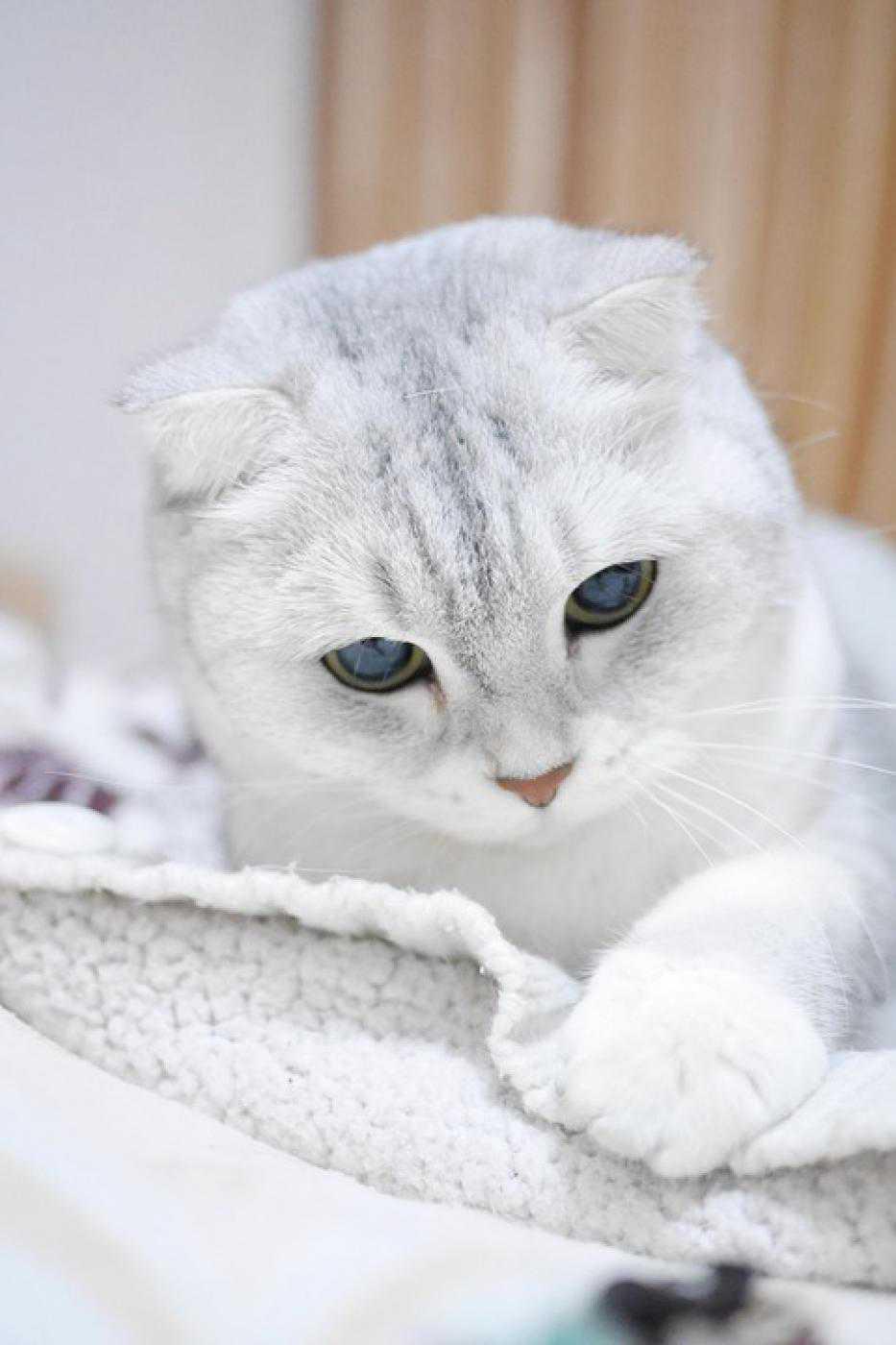 Статья с ответами на популярные вопросы можно ли кошке сыр, молоко, рыбу, печень, валерианку и можно ли кошку стричь, мыть, стерилизовать.