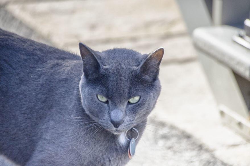 Скачать смешные фото русской кошки