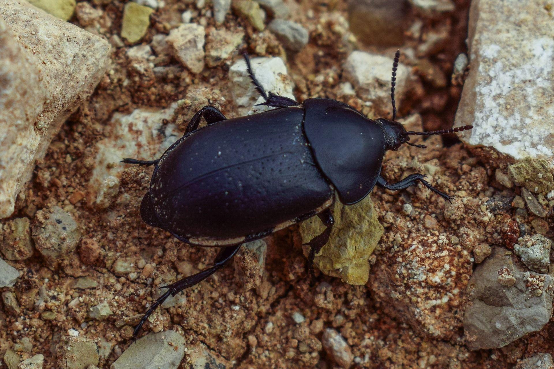 Скачать красивое фото необычного черного жука