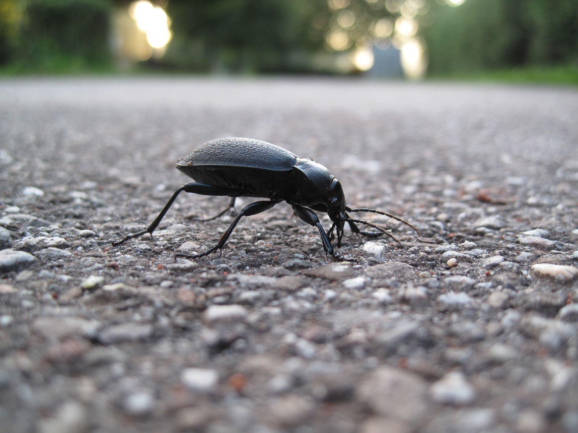 Смотреть необычное фото черного жука