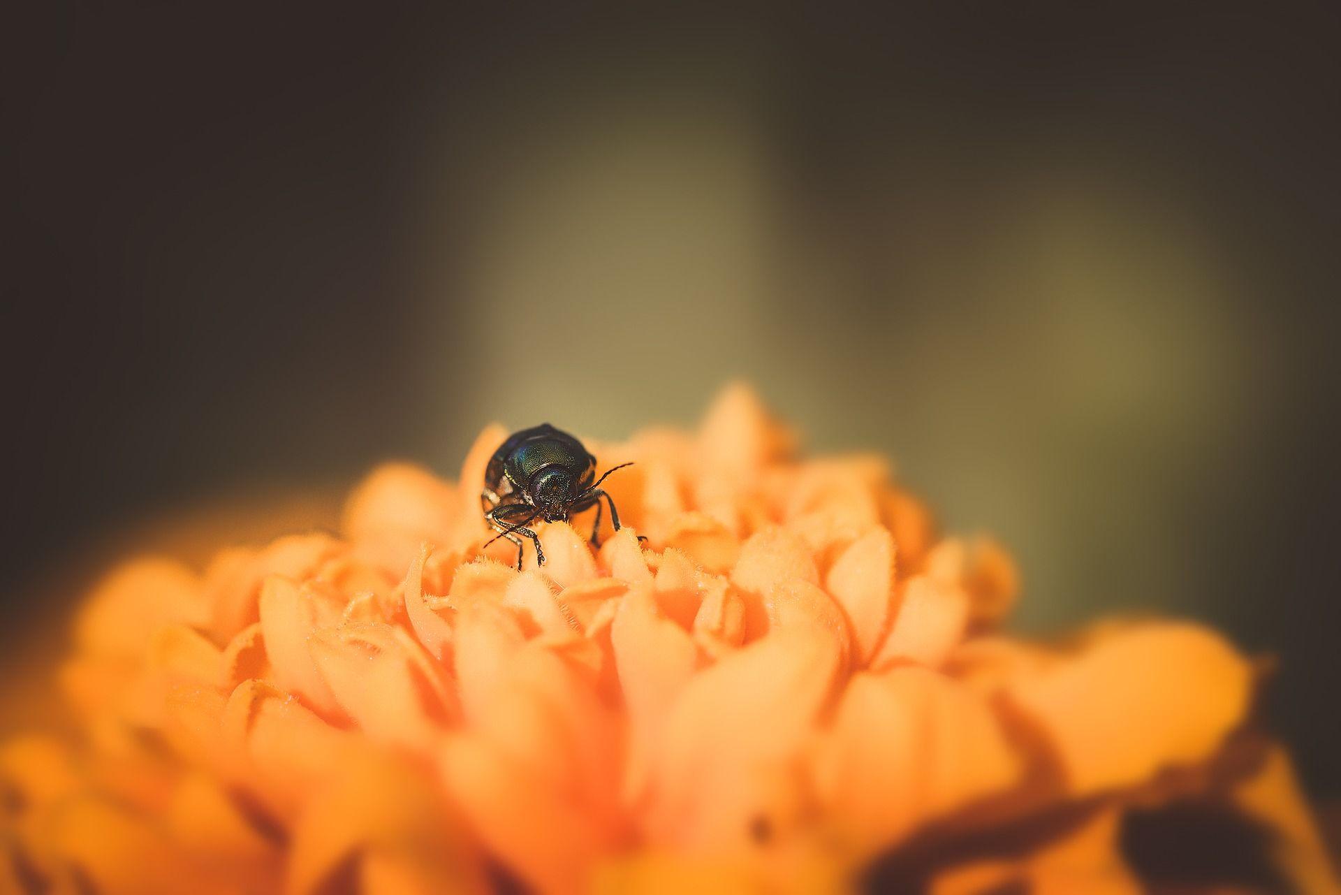 Смотреть красивую картинку большого синего жука бесплатно