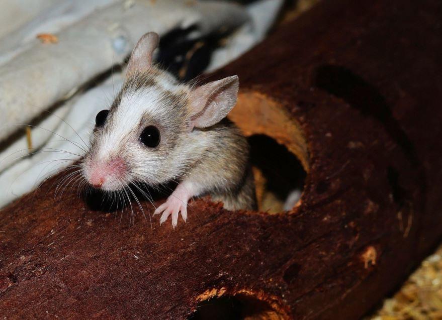 Смотреть красивое фото мышки землеройки