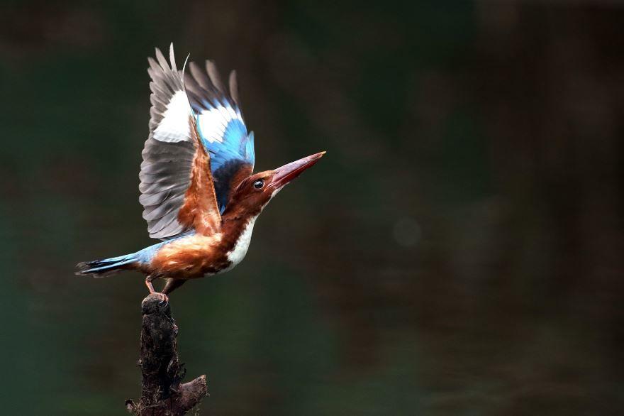 Смотреть красивое фото зимородок на веточке