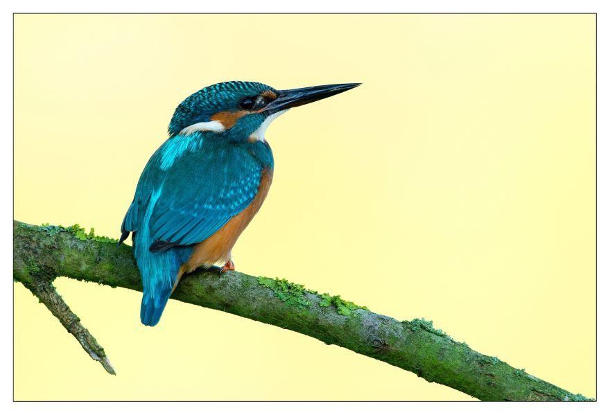 Скачать красивую картинку зимородок около пруда