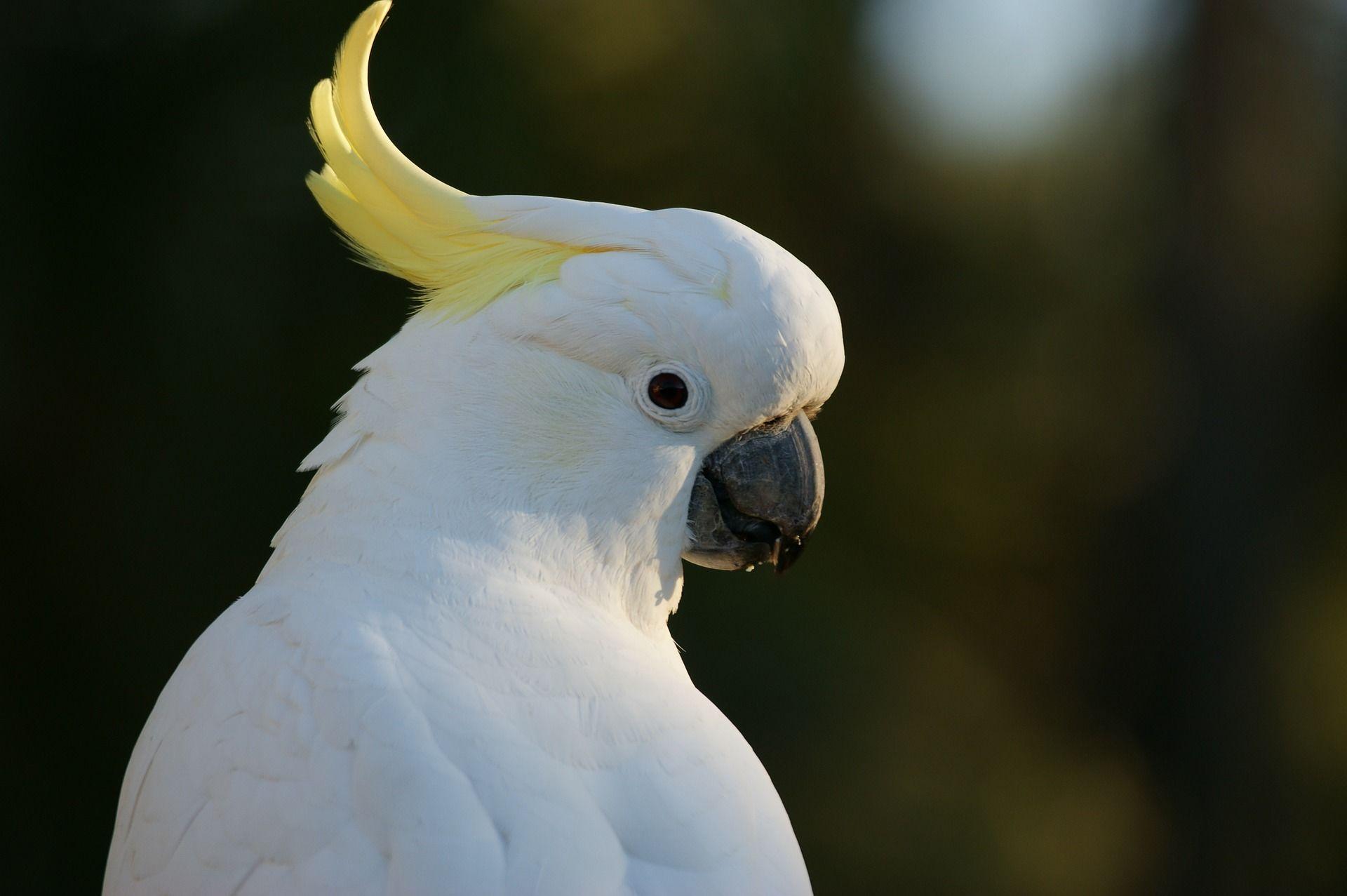 Смотреть красивую картинку птицы Какаду
