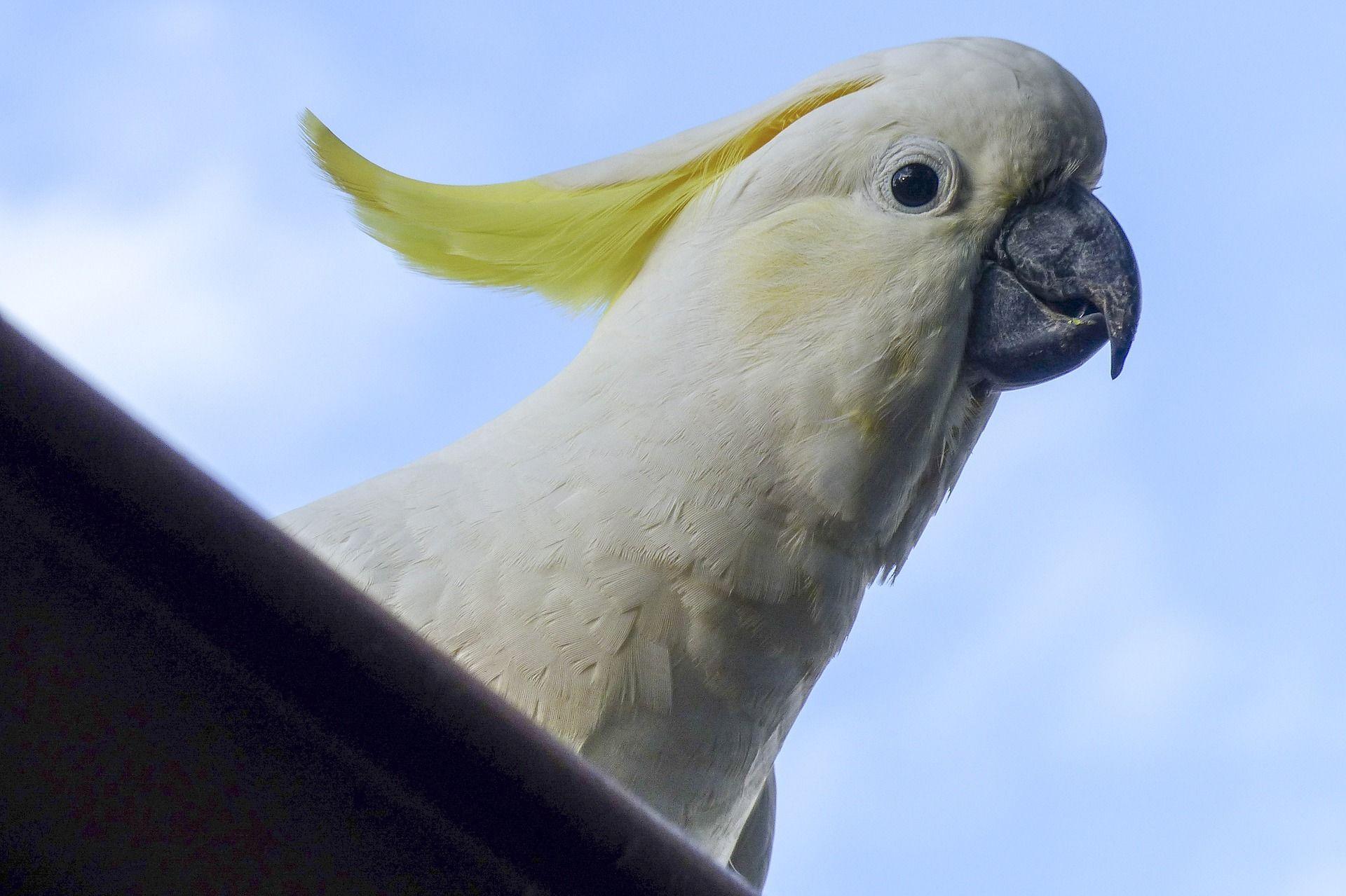 Смотреть лучшее фото Какаду с едой