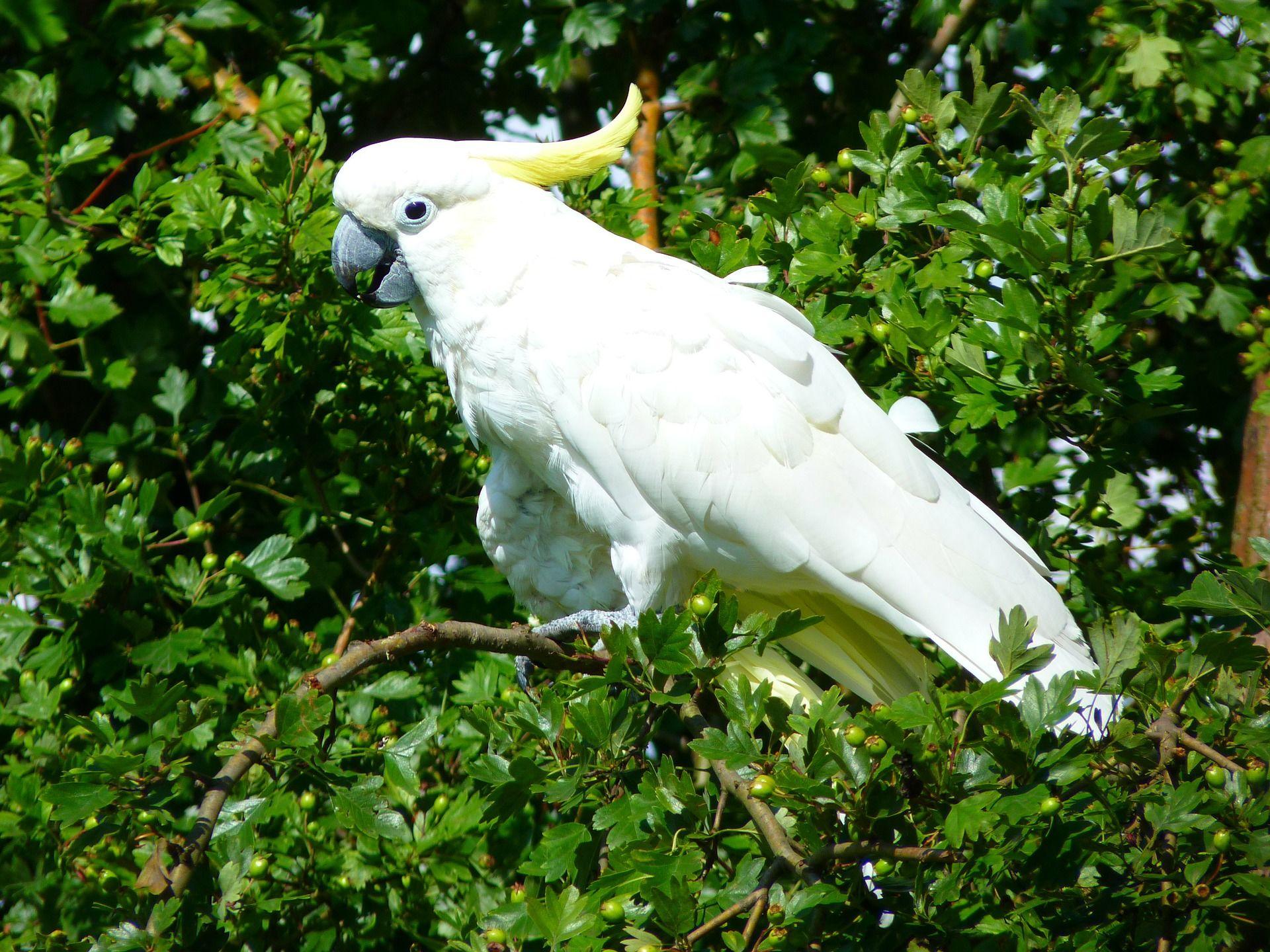 Скачать бесплатно лучшее фото Какаду на природе