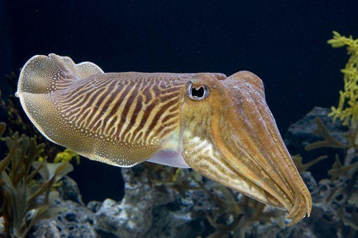 Смотреть лучшую картинку кальмара онлайн бесплатно