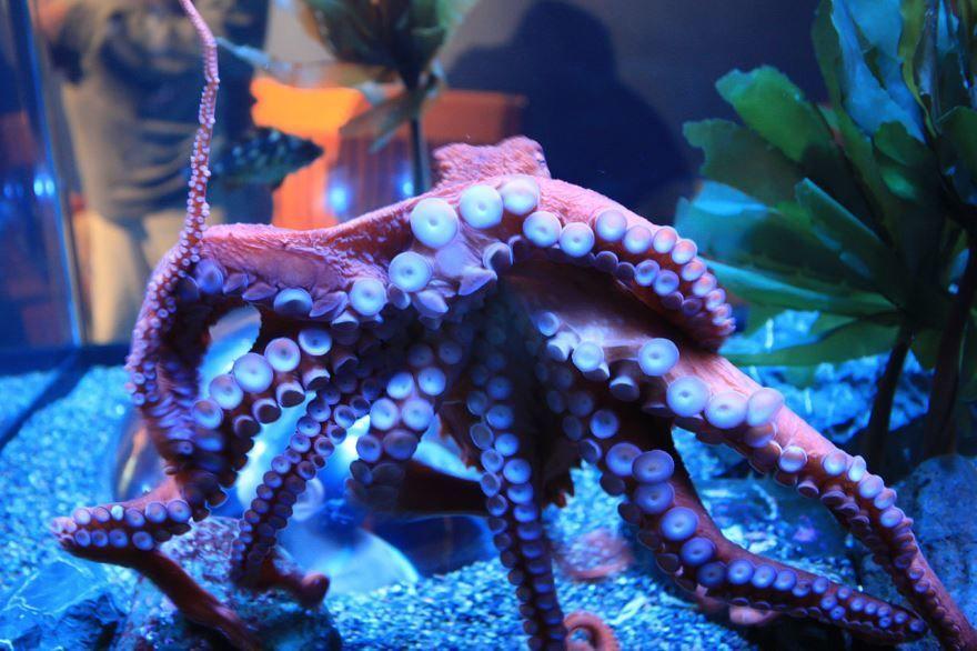 Смотреть красивое фото кальмара крупным планом