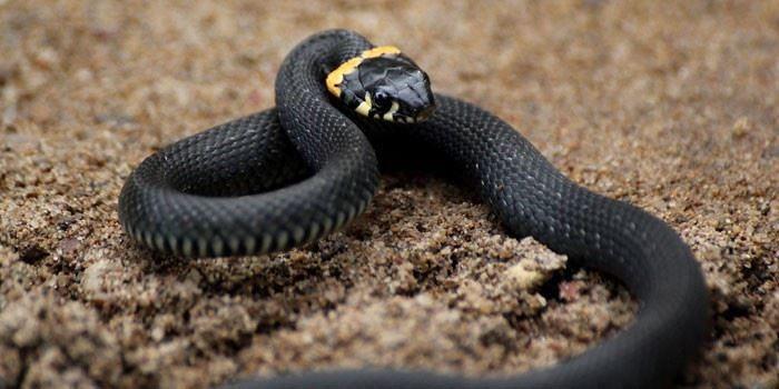 Смотреть красивую картинку черной змеи