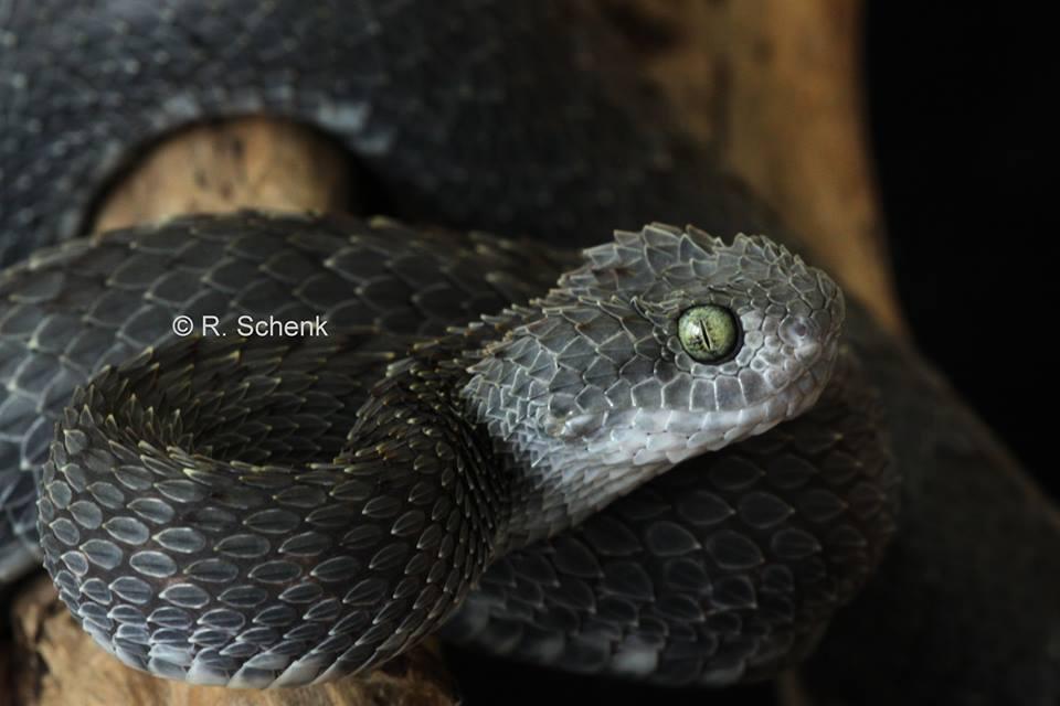 Интересная картинка змея черного цвета