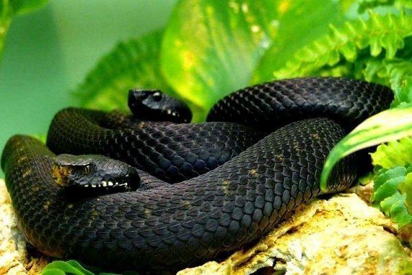 Смотреть красивое фото черной змеи на природе