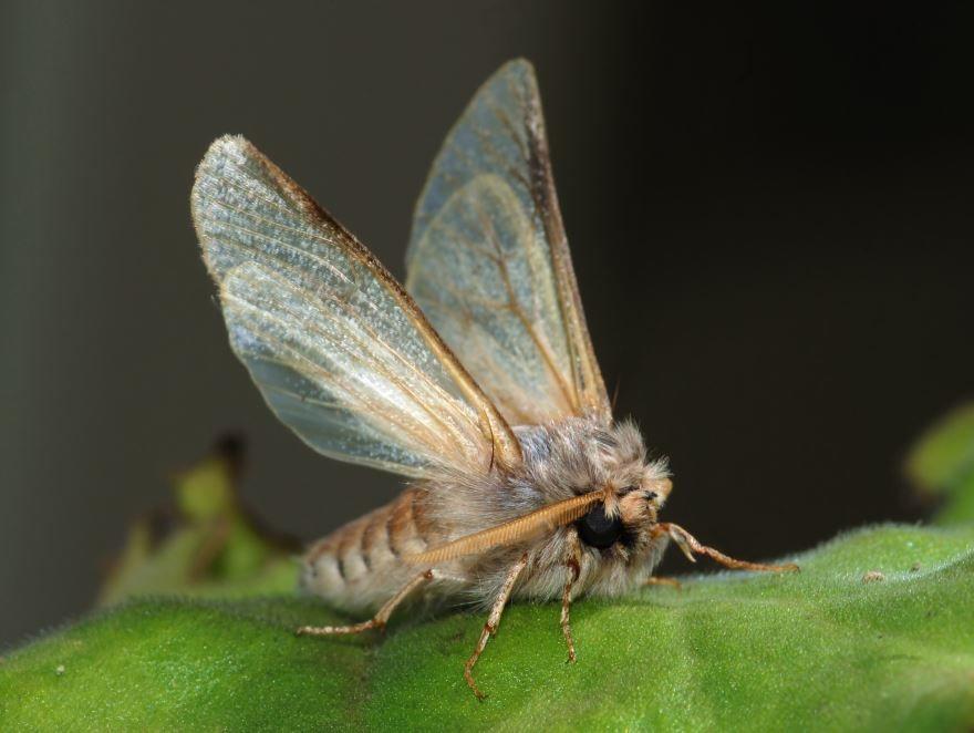 Смотреть бесплатно фото мотылька