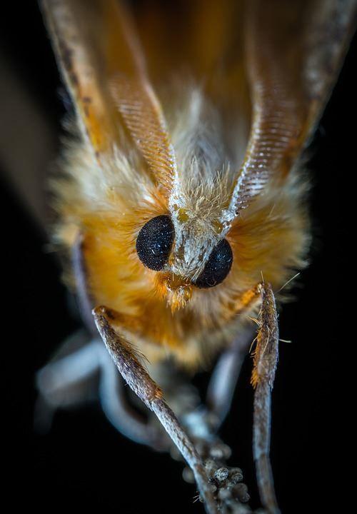 Красивые мотыльки, скачать фото