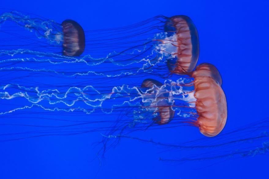 Фото медузы – смотреть онлайн
