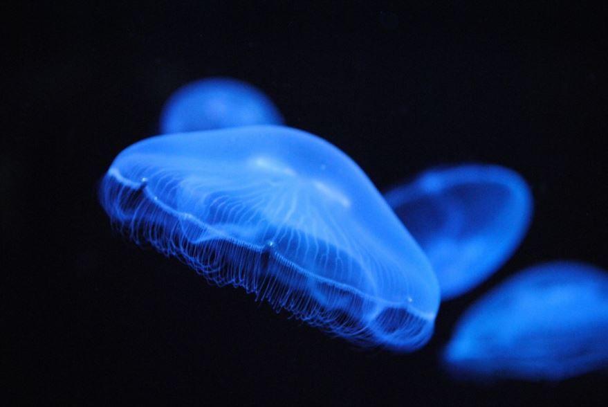 Онлайн просмотр картинок медуз