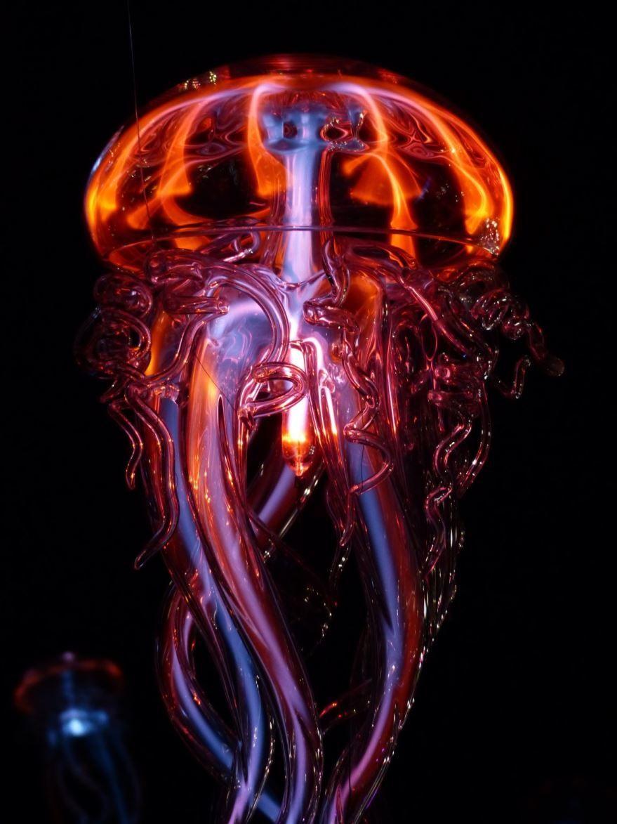 Фото медузы в черном море