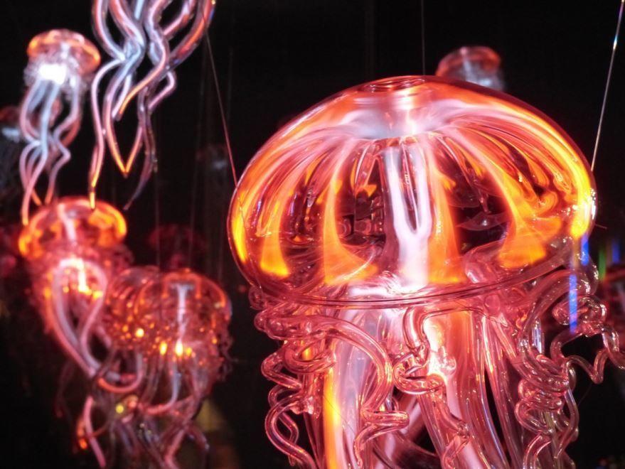 Фото красивой медузы с описанием