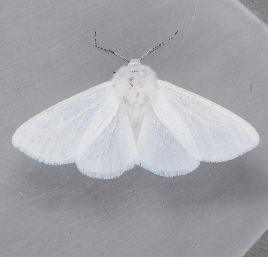 Смотреть бесплатно фото белого мотылька
