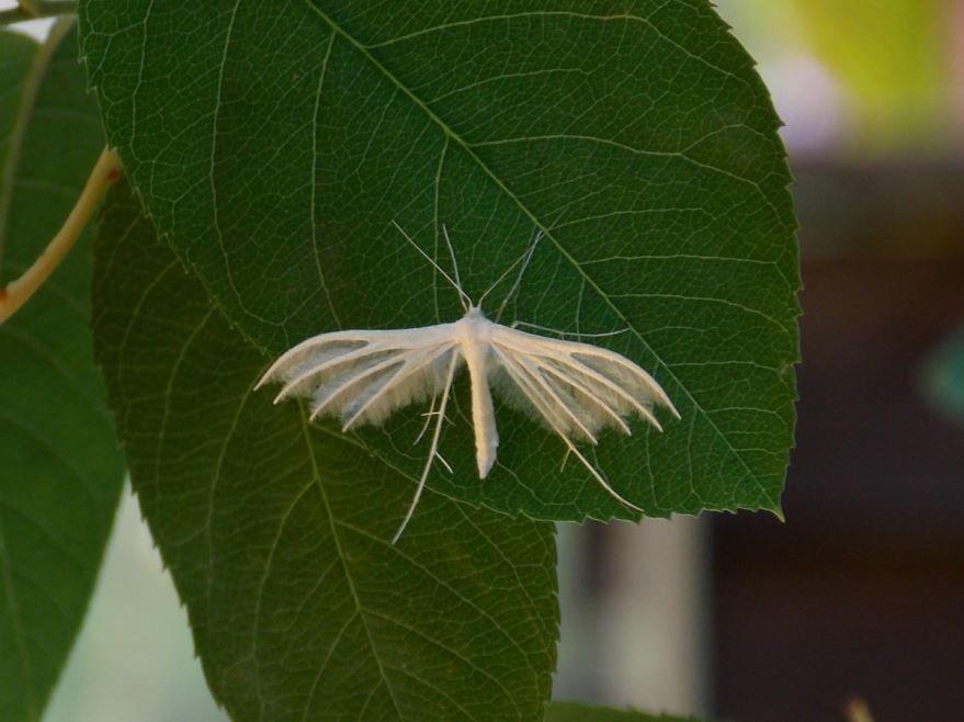 Красивые белые мотыльки, скачать фото