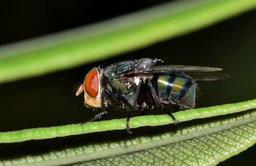 Смотреть фото мух в хорошем качестве