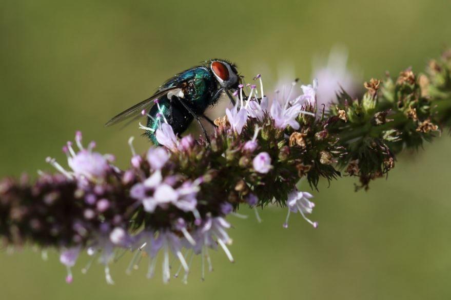 Купить фото мух в хорошем разрешении? Скачайте бесплатно