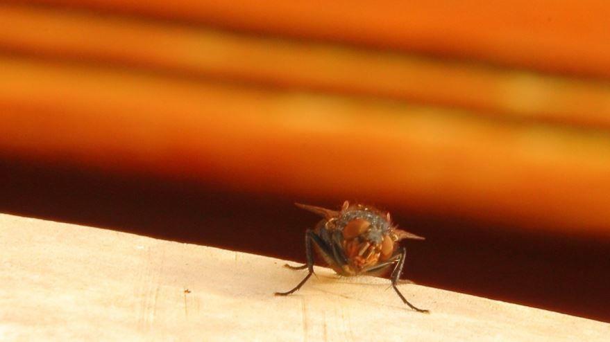 Скачать бесплатно картинки мух