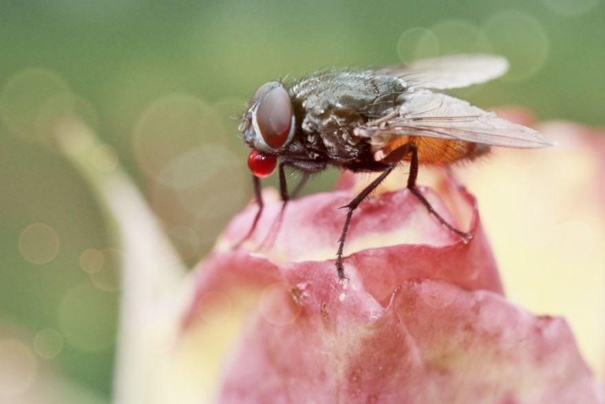 Онлайн просмотр лучших фотографий мух