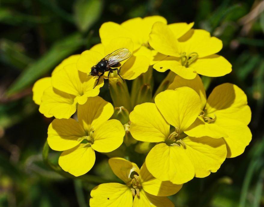 Бесплатные фото мух у нас на сайте